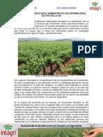 Manejo estrategico en el suministro de los cationes en el cultivo de la vid