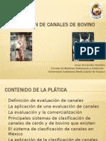 Evaluación de canales de bovino.pptx