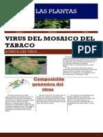 Virus del mosaico del tabaco.pdf