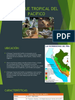 BOSQUE TROPICAL DEL PACÍFICO6.pptx