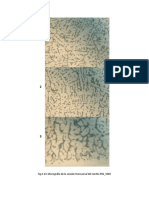 disposición de micrografías..docx