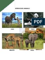 ANIMALS & TEH EAT.docx