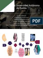 Linea del tiempo Antropología Forense.pptx