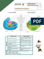 2. Partes de la Célula y Funciones