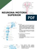 exposicion neurologia