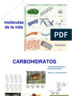 5._CARBOHIDRATOS.pdf