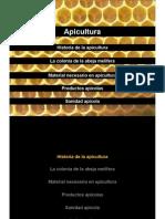 13_ARTROPODOS_apicultura