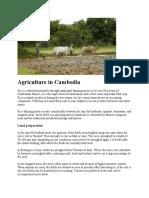 Disaster in Cambodian Farmer