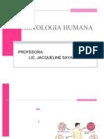 clasehistologia