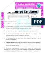 Ficha-Organelos-Celulares-para-Quinto-de-Primaria