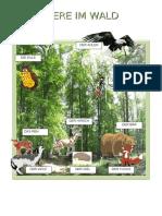 Tiere im Wald_1.docx