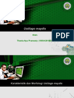 PPT Jamur Ustilago maydis