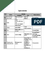 Órganos sensoriales.docx