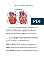 Anatomy and Physiology of the Heart-k