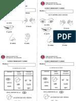 Guías Los sentidos - Vista.docx