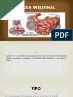 artesia-intestinal