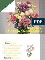 Lisianthus mariazel romero.pptx