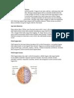 Otak Bagian Kiri Dan Kanan
