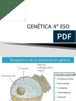 Apuntes Bioquímica de La Informaicón Génica SUSPENSIÓN CLASES SEFARAD