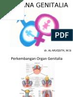 Sistem Genitalia.docx
