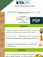 tesis de eslaboracion de vinagre
