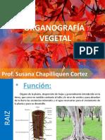 ORGANOGRAFIA VEGETAL.pptx