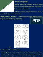 Recuperarea în pubalgie.pptx