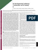 Filamentacion bacteriana en orina (2004)