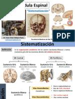 neuroanatomiasistematizacioN