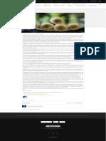 Cultivar Ajo-Poro en Hidroponia