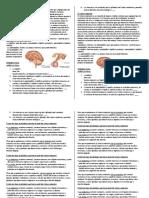 actividades endocrino.docx