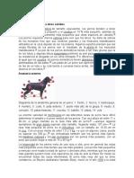 Características perros