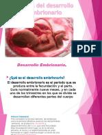 EMBRIONARIO (2)