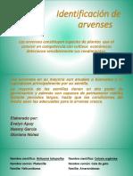 guia de identificacion de especies.pdf