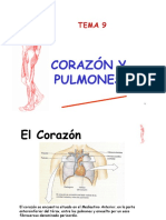 Tema 9 Corazón y pulmones