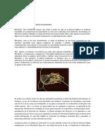 FIJACIÓN DEL NITRÓGENO.pdf