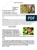 ABEJAS AFRICANIZADAS.docx