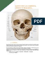 Tema 6 - Esqueleto de la Cabezaa