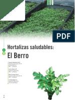 Berro INIA.pdf