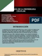 EXPO- fisiología DE LA MEMBRANA CELULAR