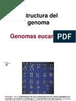 3._Estructura_del_genoma