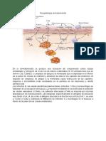 Fisiopato dermatopolimiositis