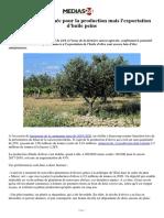 Olives_ Bonne année pour la production mais l'exportation d'huile peine.pdf