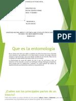 entomología tarea unidad1.pptx