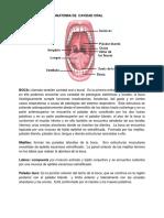 MODULO DE OTORRINOLARINGOLOGIA-1