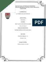 SISITEMA REPRODUCTOR MASCULINO-JERSY-DOMINGO.docx