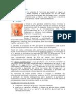 Sistema Endócrino.docx