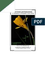 Narcissus portomosensis A. Fernandes ex Fernández Casas (2018)
