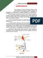 Aula - Sistema Nervoso Central