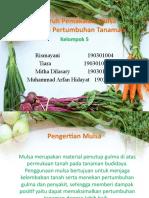 Pengaruh Pemakaian Mulsa klompok 5.pptx